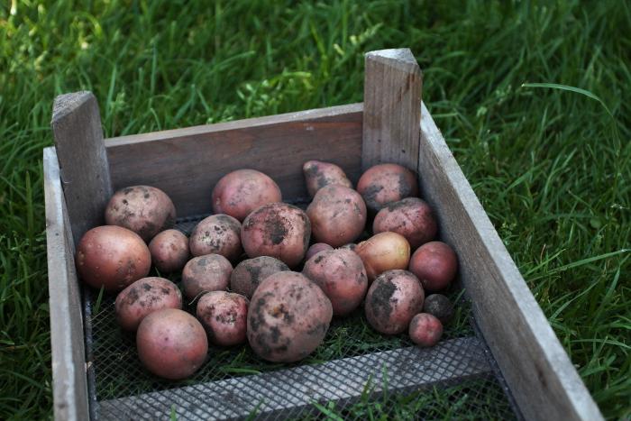 aardappelsalade 1