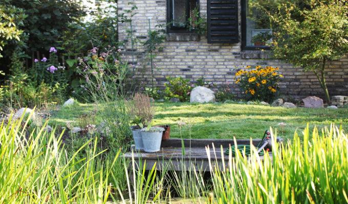 Onze tuin in foto's; zomer